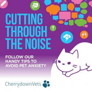 Pet anxiety graphic design
